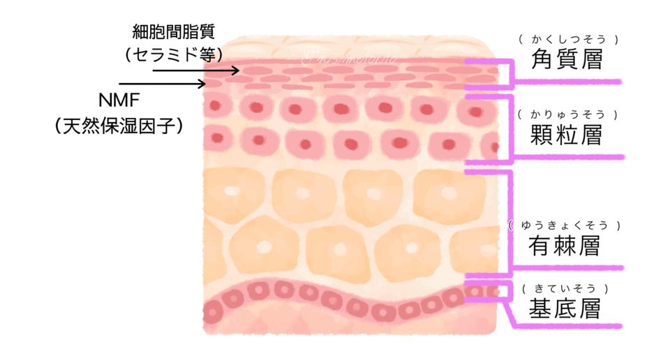 肌内部画像